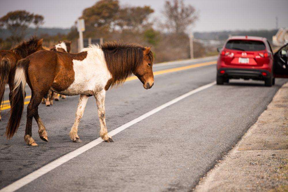 Horses on Road